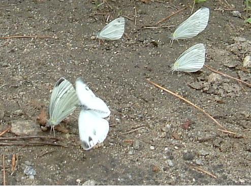 나비2.jpg