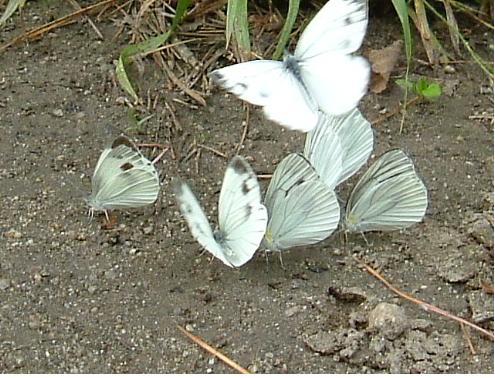 나비3.jpg