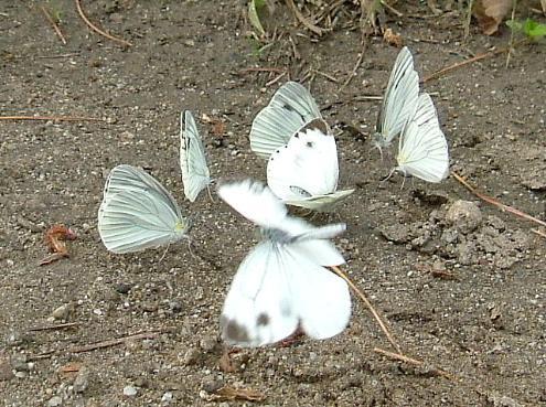 나비4.jpg