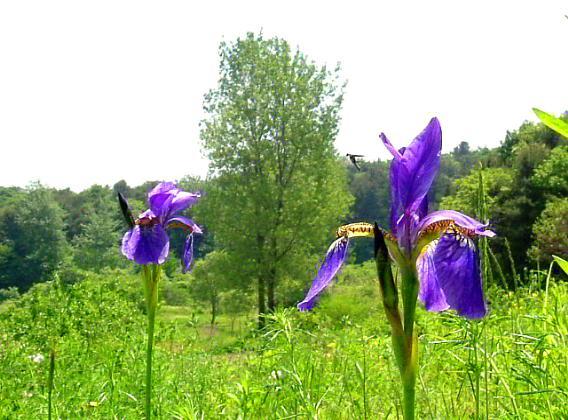 꽃하늘소2.jpg