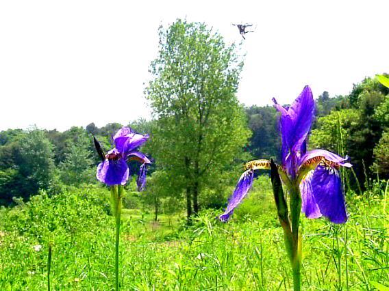 꽃하늘소4.jpg