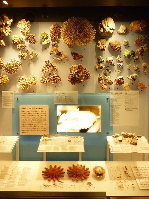 축소_120122일본해의 산호들.jpg