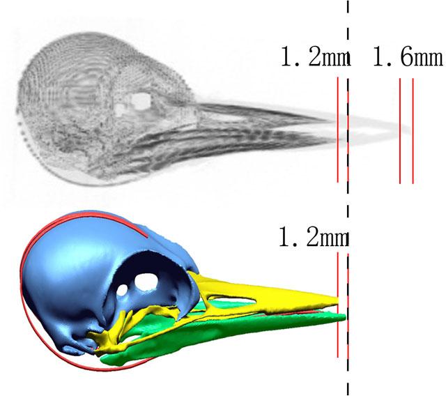 woodpecker-head.jpg
