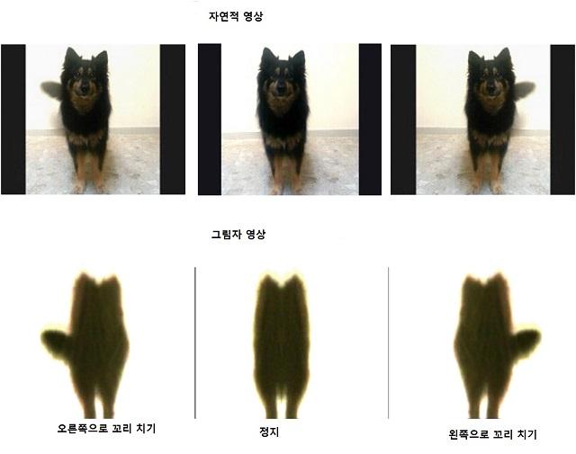dog-wag_s.jpg