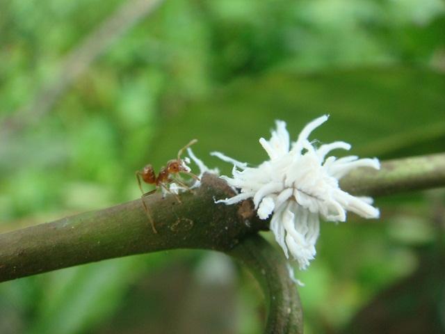 s_ants1.jpg