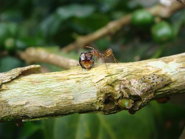 s_ants5.jpg