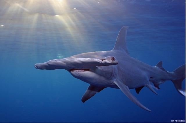 shark3-1_짐 애버너티.jpg