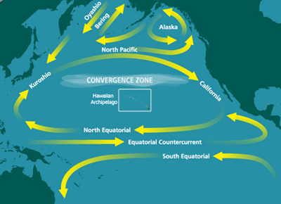 noaa_North_Pacific_Subtropical_Convergence_Zone.jpg