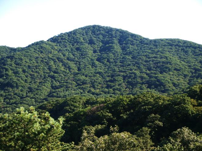 소리봉 천연활엽수림 전경.jpg
