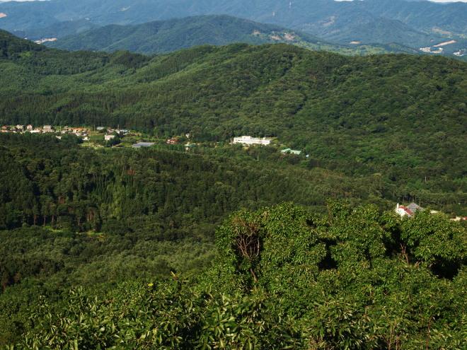 천연림과 인공림이 숲의 바다를 이룬 광릉숲 전경.jpg