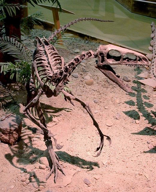 Greg Goebel_800px-Zuni_Coelurosaur.jpg