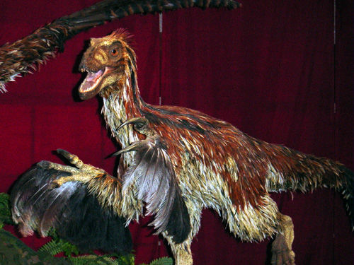 Deinonychus_feathered.jpg