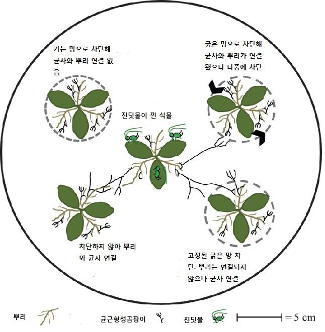 plant2-1.jpg