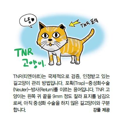 cat6_1.jpg