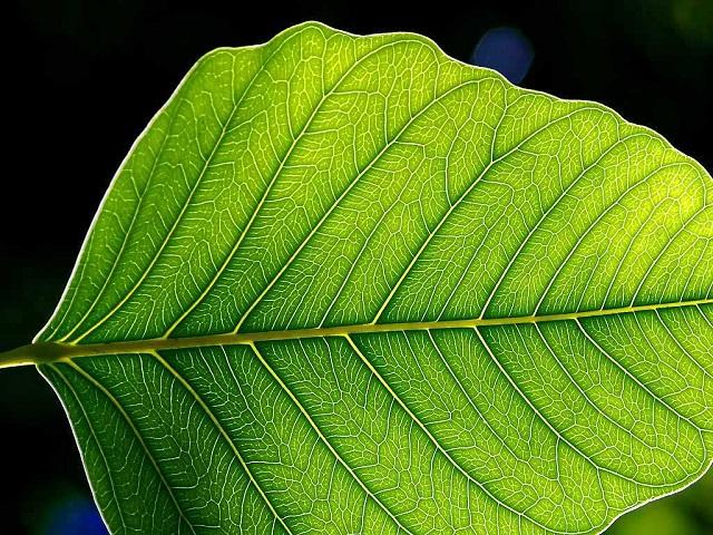 Jon Sullivan _Leaf_1_web.jpg