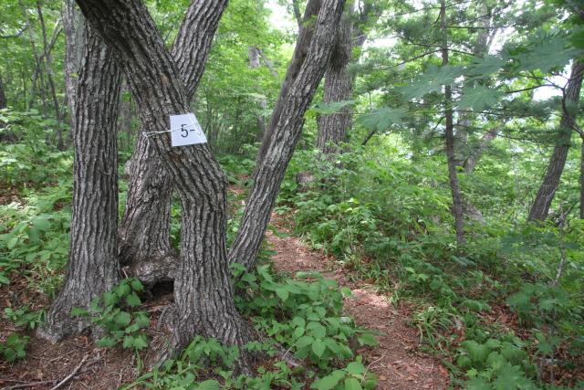 5번지주신갈나무1.JPG