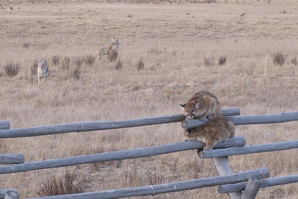 lions-4-approach.jpg