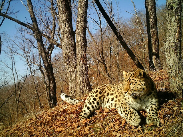 Land of the Leopard National Park-s.jpg