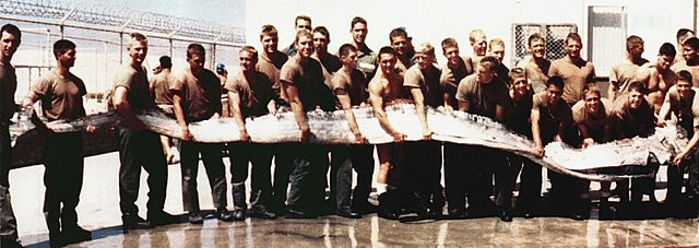 the photograph was actually taken in 1996 and shows a Giant Oarfish found on the shore of the Pacific Ocean near San Diego, California. This extremely rare specimen was 7.0 m long and weighed 140 kg.jpg