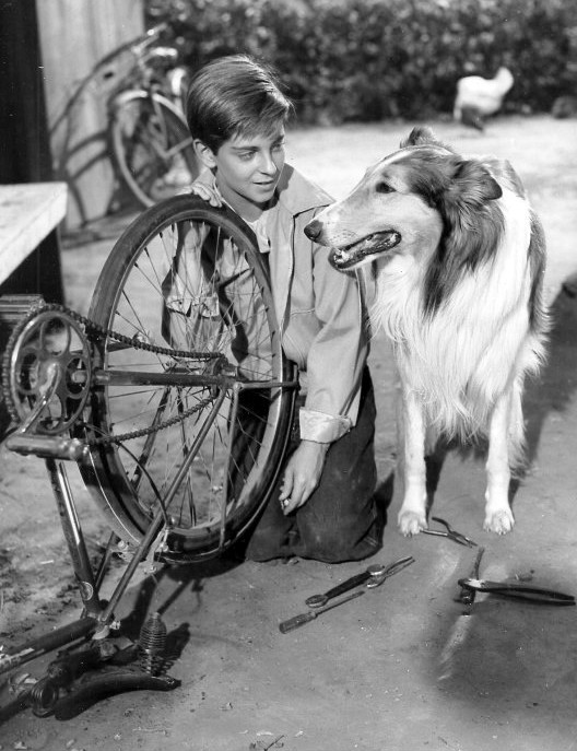 Lassie_and_Tommy_Rettig_1956.JPG