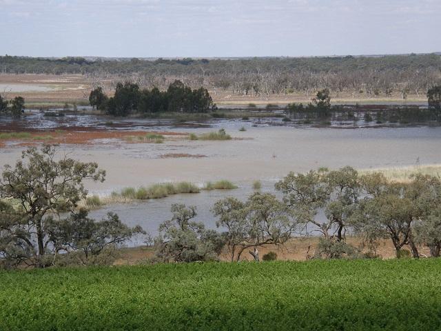 람라스 습지로 지정된 머레이강변 습지와 밴록 포도원.jpg