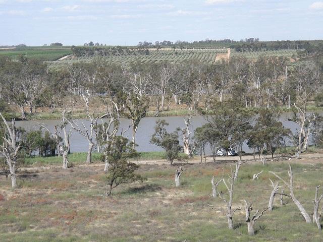 지나친 관개로 강물의 염분이 줄어 유칼리 나무가 하얗게 죽은 머레이 강변의 람코 라군 모습.jpg