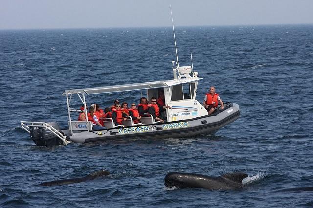 Elizabeth Zwamborn_canada_Whale-Watching_Cape_Breton.JPG