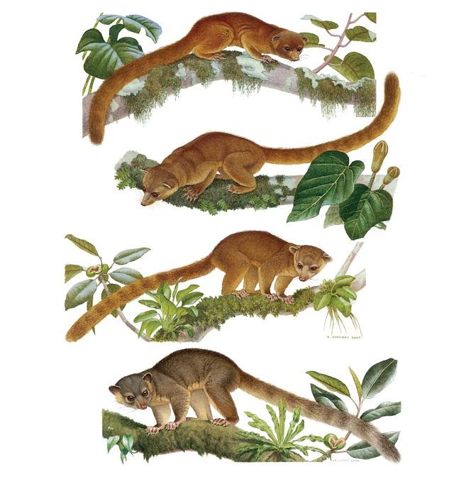 신종 육식동물s.jpg