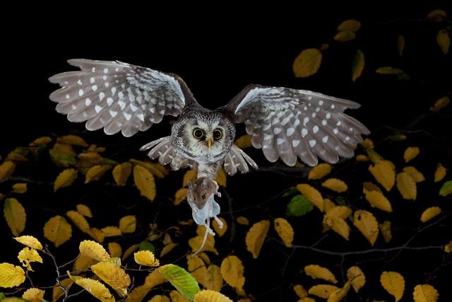C. Robiller_ www.naturlichter.jpg