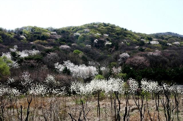 봄숲.jpg