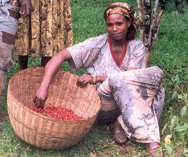 [사진4]Female_coffee_farmer_in_Ethiopia.jpg
