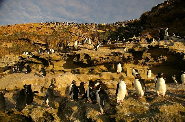 p5_Ben Tubby-Rockhopper-Colony.jpg