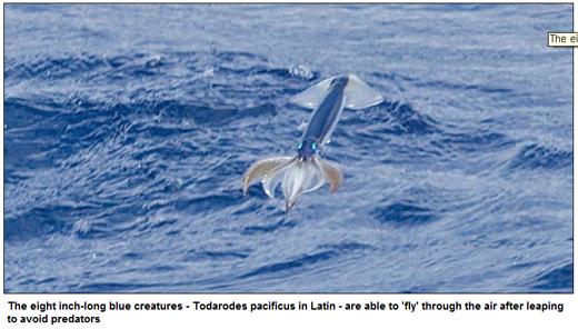 squid1-1.jpg