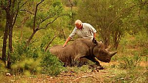 rhino_dr_jacques_flamand_11230.jpg