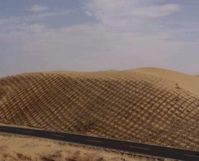 모래고정1.jpg