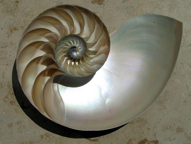 793px-NautilusCutawayLogarithmicSpiral.jpg