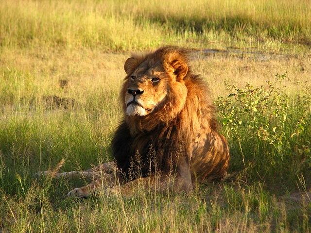 Cecil_the_lion2.jpg