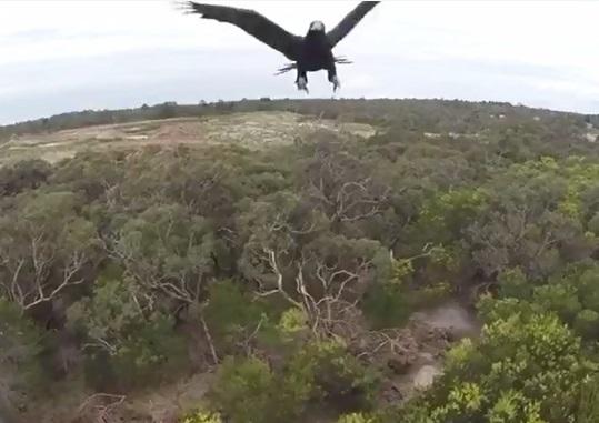 Melbourne Aerial Video.jpg