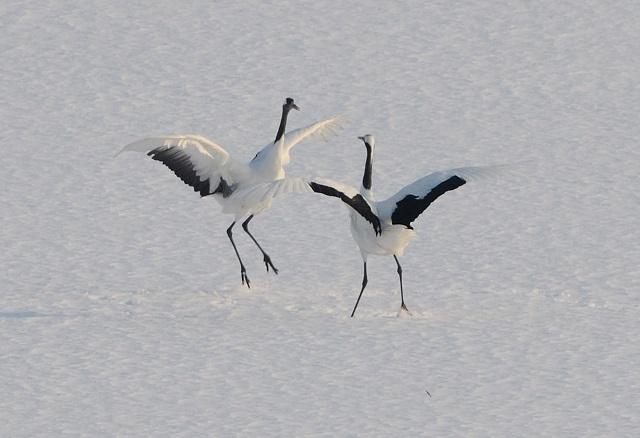 crane_love1.jpg