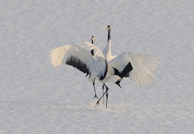 crane_love4.jpg