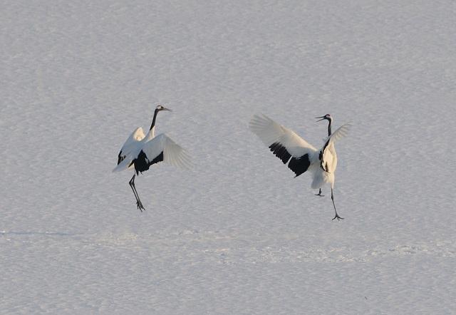 crane_love6.jpg
