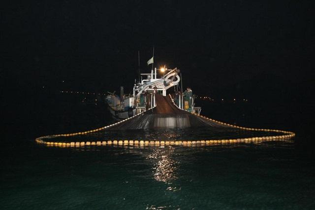 anchovy10.jpg