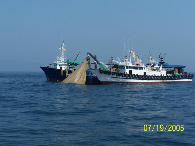 anchovy8.jpg