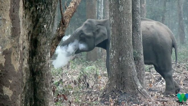 _100579947_thesmokingelephant.png