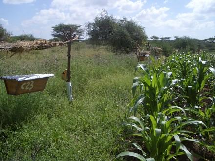beehive-fence1.jpg