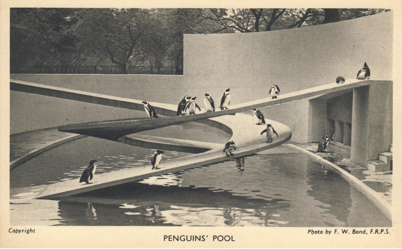 F-Penguins' pool.jpg