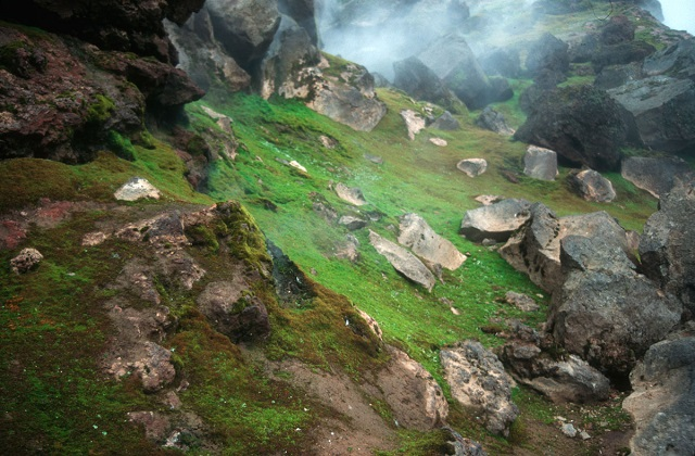 a2_Volcanic steam hovers over fields of mosses on the Antarctic South Sandwich Islands_pete convey.jpg