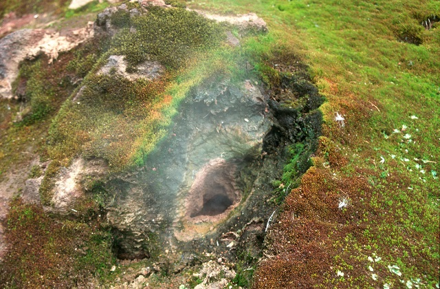 a3_Volcanic steam rises out of a fumarole, surrounded by lush mosses and other lifeforms, on the Antarctic South Sandwich Islands_pete convey.jpg