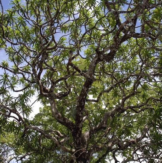 sp4_paul wilkin_75015427_dragontree.jpg