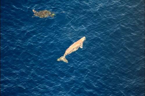 dugong&turtle.jpg